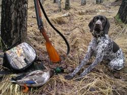 28 марта в Курской области откроется сезон охоты на дичь