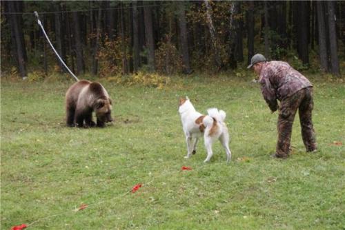 Обучение охотничьей собаки
